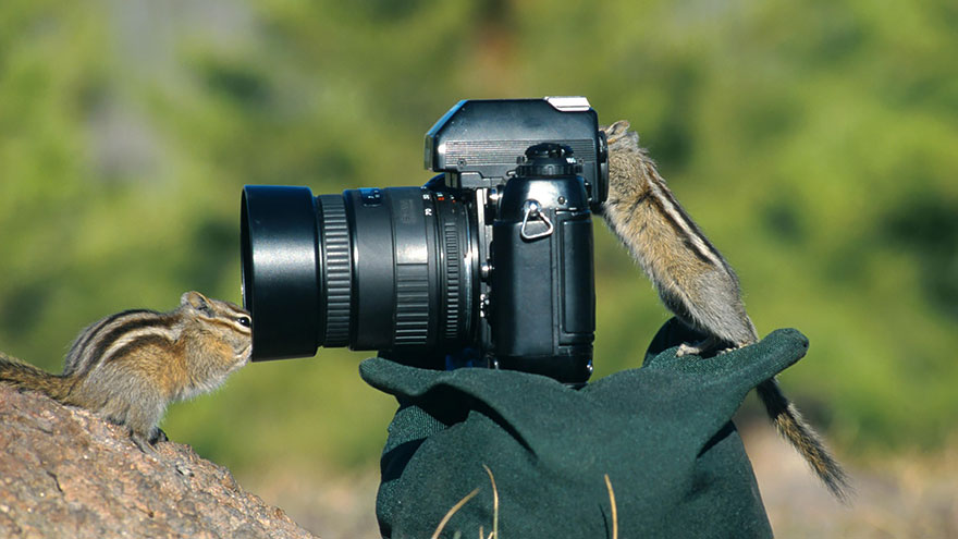 25 Animales encantadores que quieren ser fotógrafos