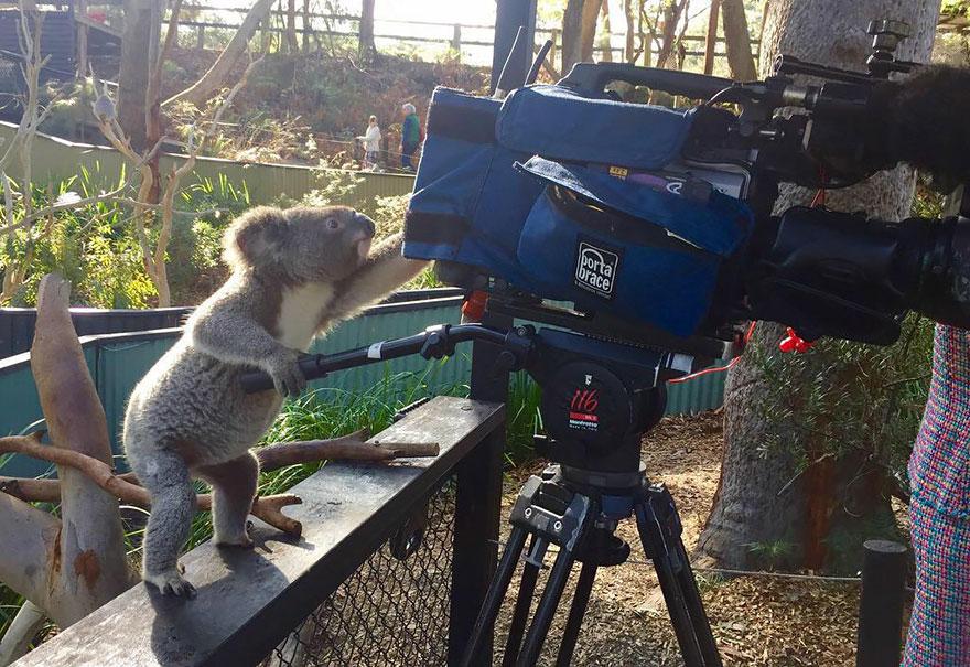 animales-camara-ayudando-fotografos (21)
