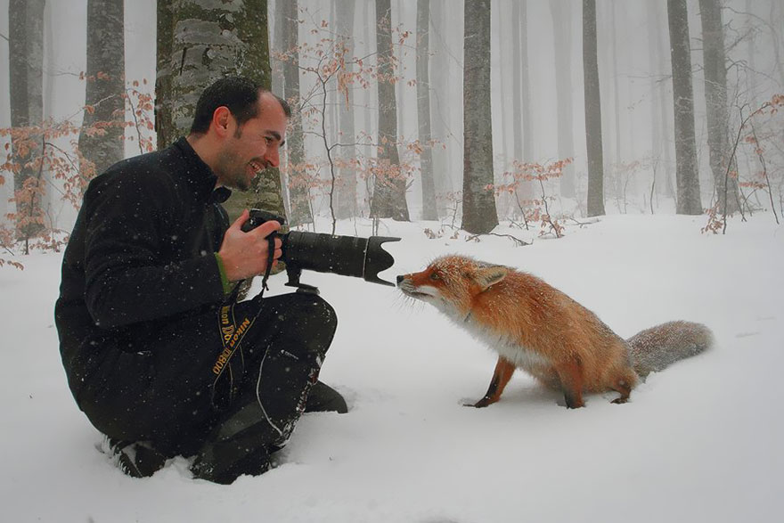 animales-camara-ayudando-fotografos (26)