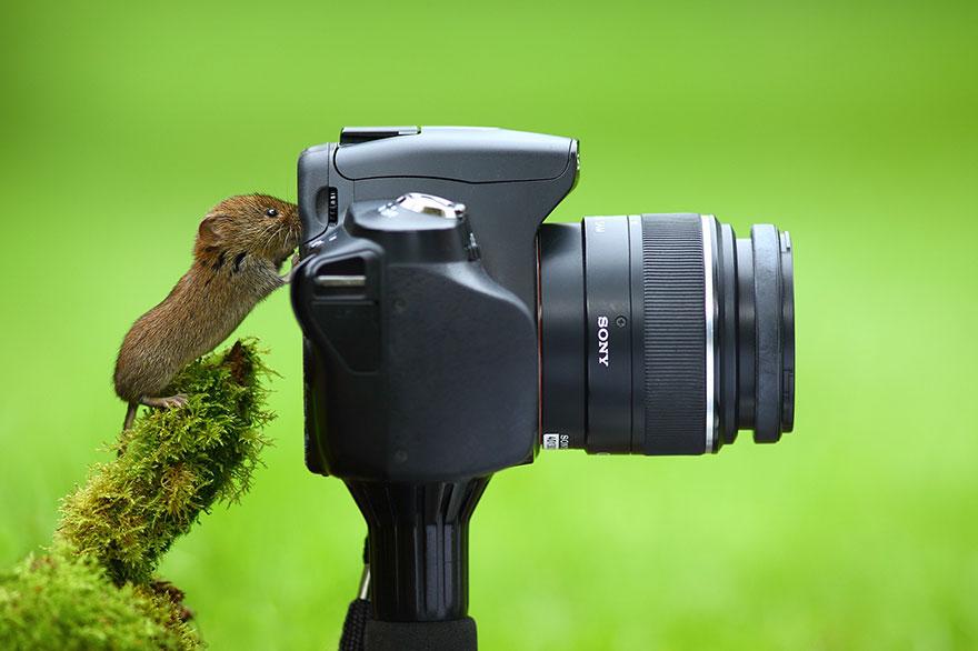 animales-camara-ayudando-fotografos (29)
