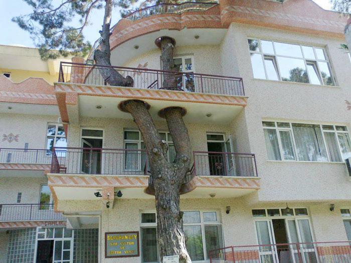 13 Edificios ingeniosos cuyos arquitectos se negaron a talar árboles