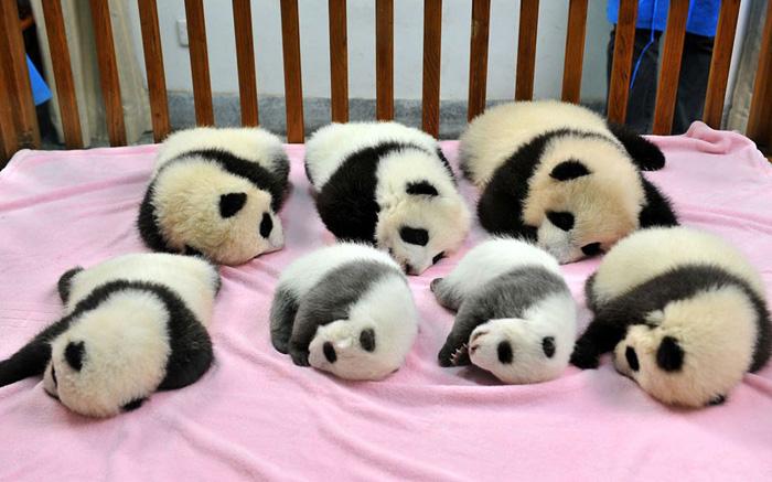 """Existe una """"guardería"""" para pandas y es un lugar adorable"""