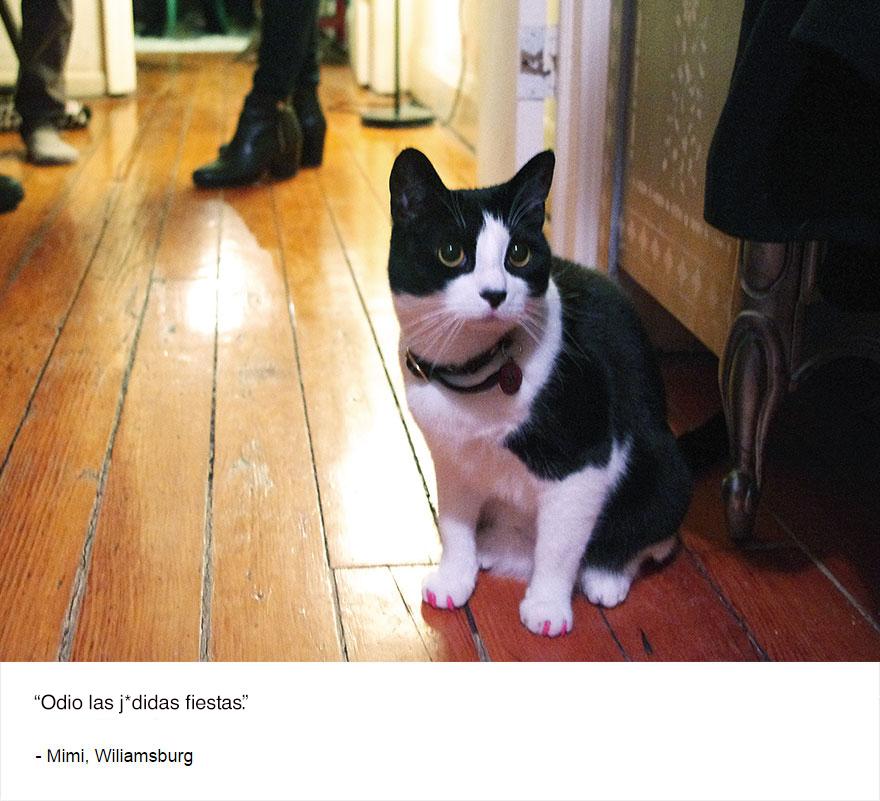felinos-de-nueva-york-blog-jim-tews-10