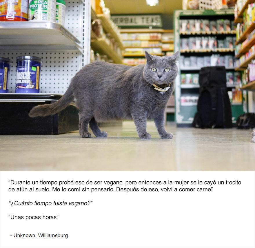 felinos-de-nueva-york-blog-jim-tews-8