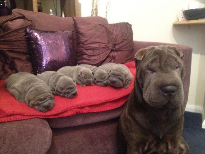 fotos-padres-perros-cachorros (10)