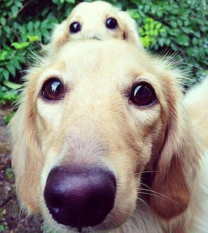 fotos-padres-perros-cachorros (12)