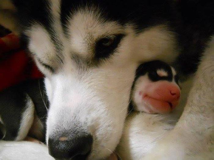 fotos-padres-perros-cachorros (15)
