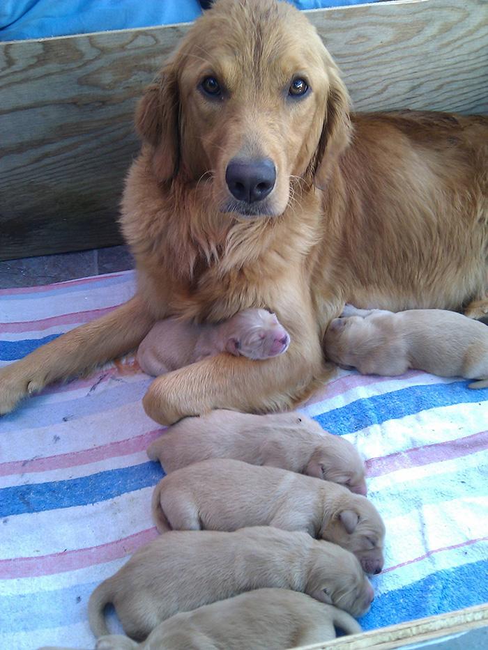 fotos-padres-perros-cachorros (17)