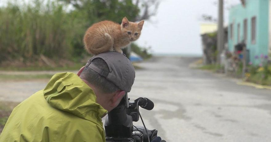 gatito-callejero-amistad-fotografo-mitsuaki-iwago (5)