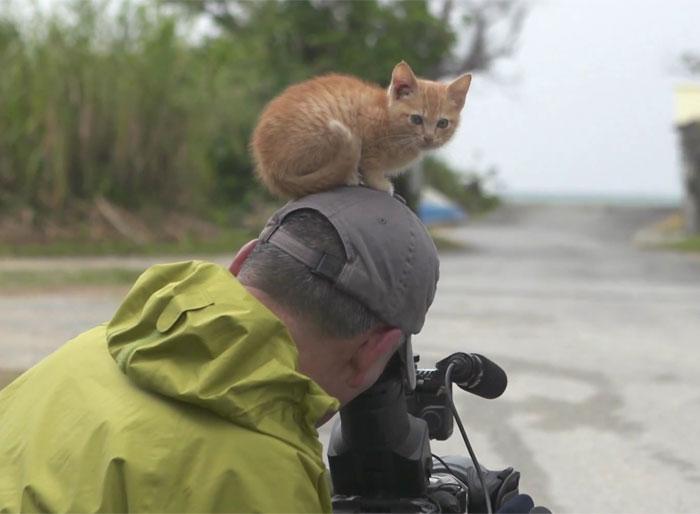 Este gatito callejero se hace amigo de un famoso fotógrafo usando sus irresistibles encantos felinos