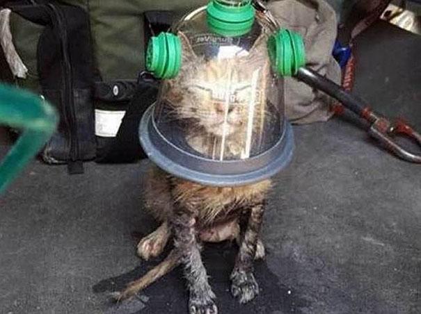 Los bomberos salvan a un gato inconsciente con una máscara de oxígeno especial para mascotas