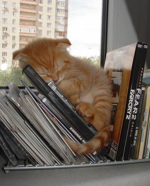 gatos-durmiendo (11)