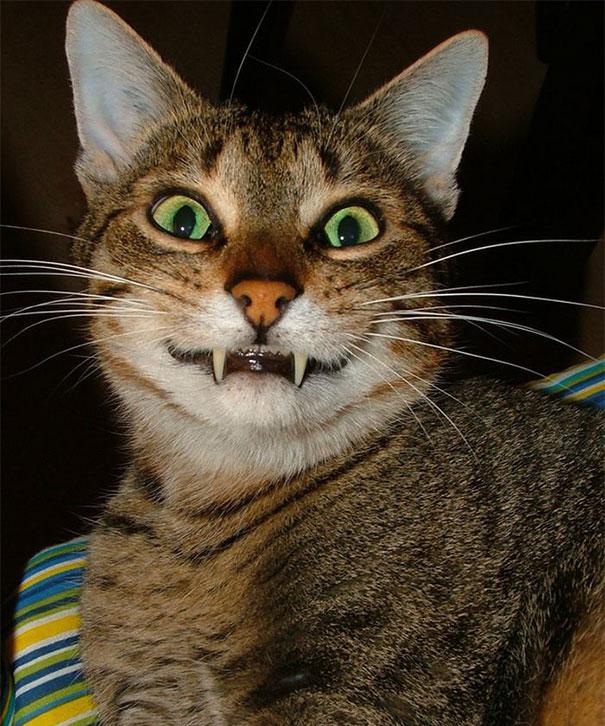 gatos-sonrientes (25)