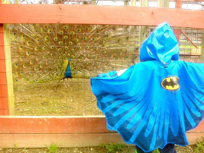 Este niño fue al zoo con su chubasquero de Batman y un pavo real se lo tomó como un desafío