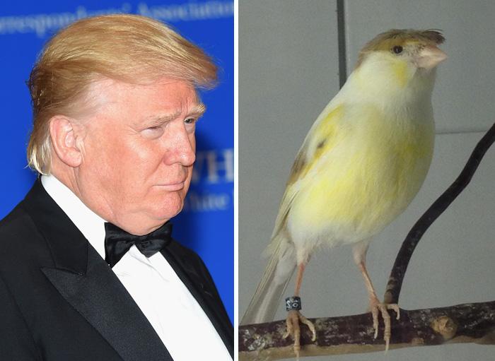 20 Cosas que se parecen mucho a Donald Trump  99af503a025f