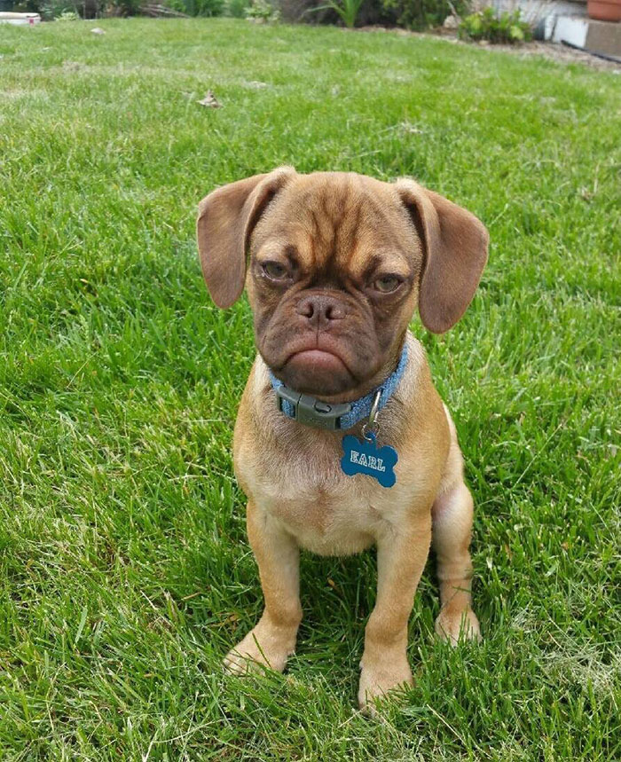Este perro gruñón te odia incluso más que Grumpy Cat