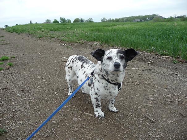 cruces-perros-raza (19)