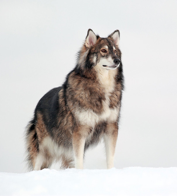 cruces-perros-raza (39)