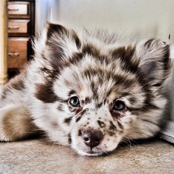 cruces-perros-raza (4)
