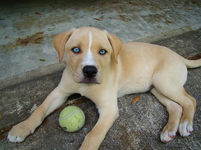 20 Cruces de perros que te harán enamorarte de los chuchos
