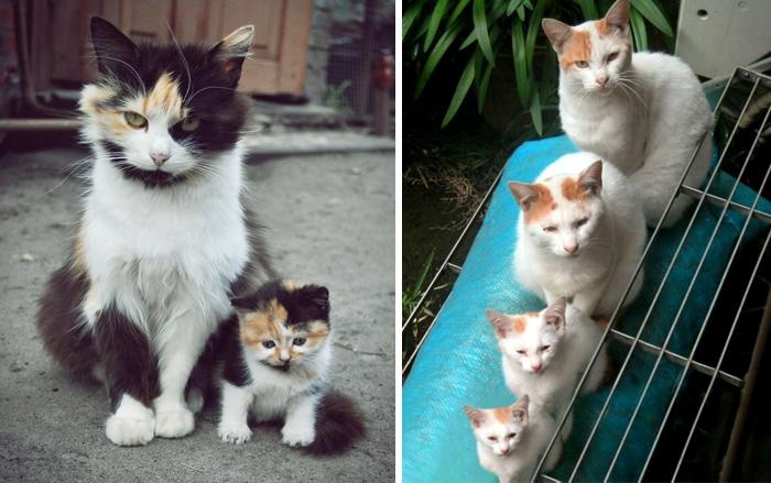 20 Gatos con sus adorables miniyos