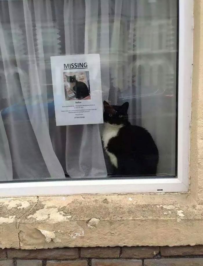 """Este gato perdido apareció cerca de su propio cartel de """"gato perdido"""""""