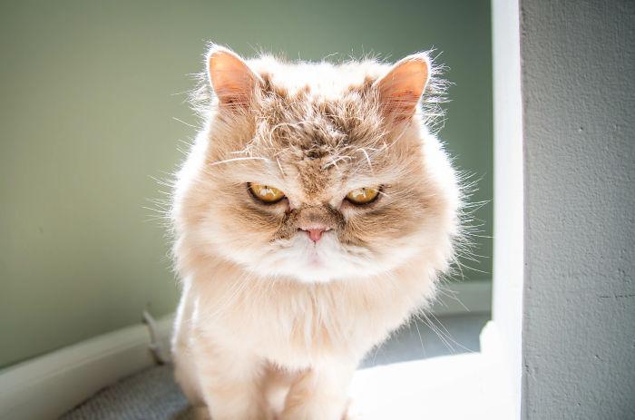 Los gatos no son fríos, tienen emociones igual que tú