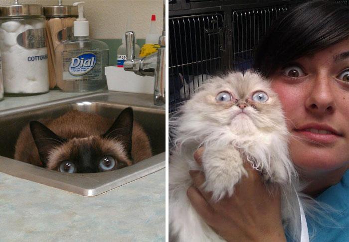 15 Gatos que se acaban de dar cuenta de que les has llevado al veterinario