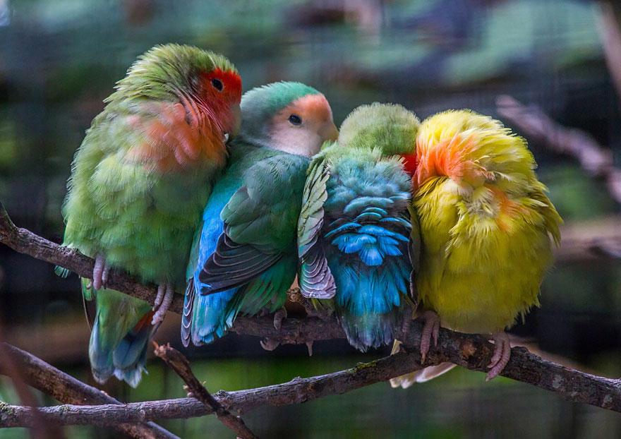 16 Fotos de pájaros acurrucados que a tí también te darán calor