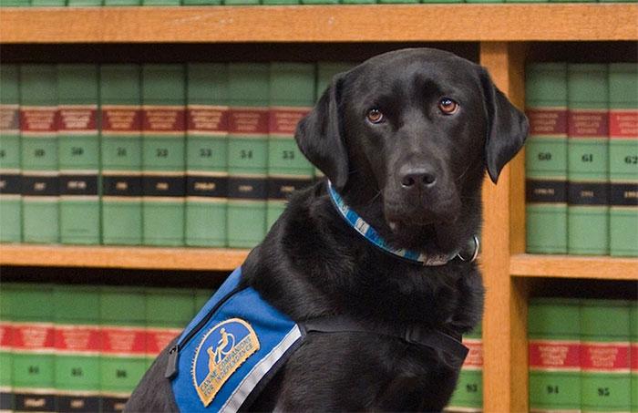 perros-juzgado-calmar-victimas-testigos-ellen-oneill-celeste-walsen (3)