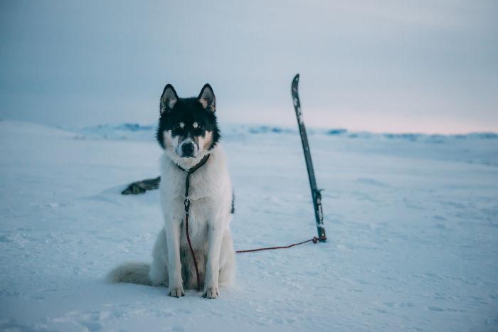 Dejé mi trabajo para irme de aventuras con mi perro husky