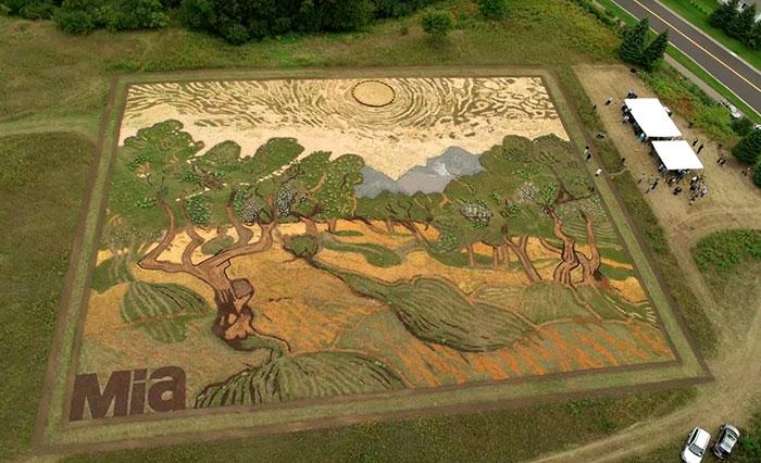 Este artista plantó un campo de casi 5 kms² para recrear un cuadro de Van Gogh