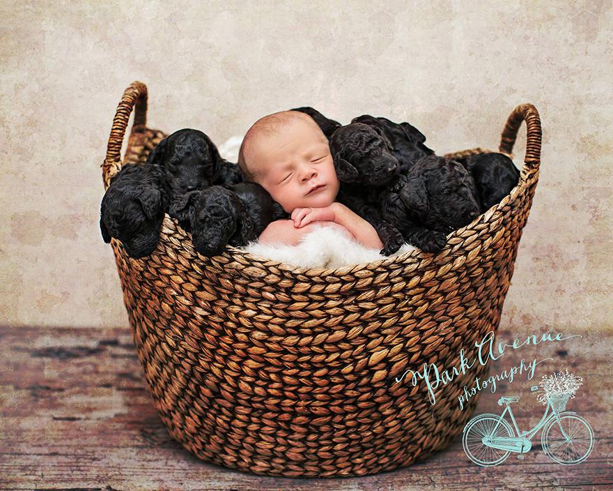 perro-delia-cachorros-duena-kami-klingbeil-bebe-mismo-tiempo (1)