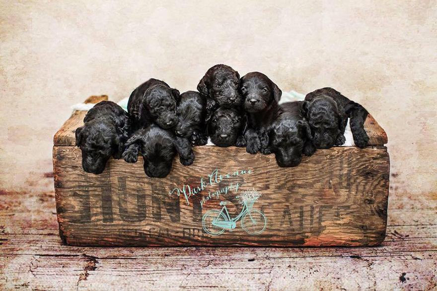 perro-delia-cachorros-duena-kami-klingbeil-bebe-mismo-tiempo (2)