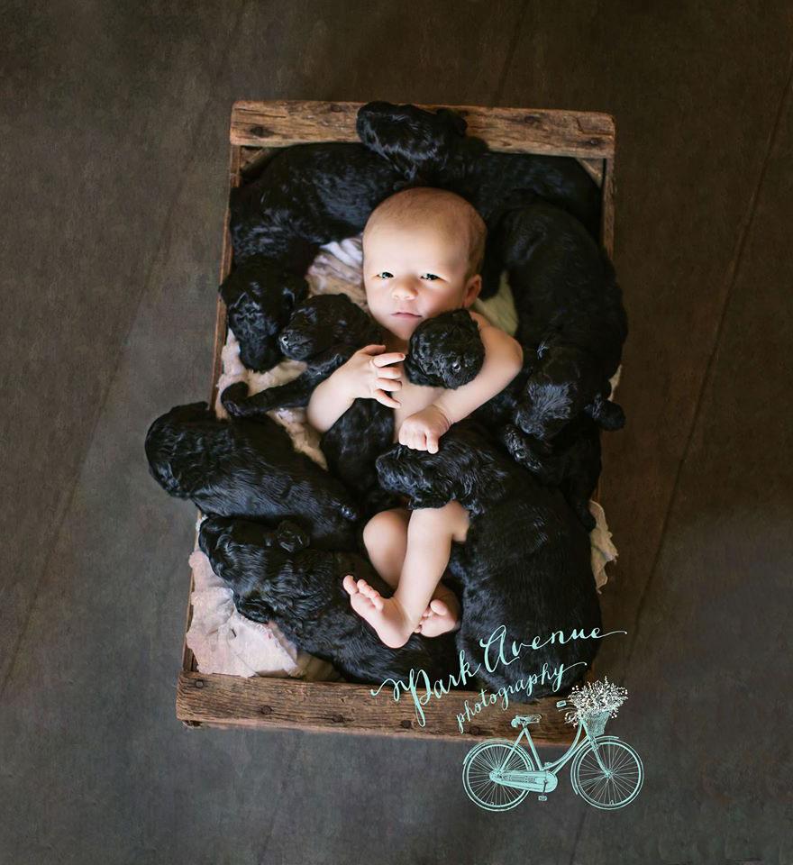 perro-delia-cachorros-duena-kami-klingbeil-bebe-mismo-tiempo (3)