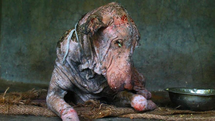 perro-enfermo-rescatado-animal-aid-unlimited (1)