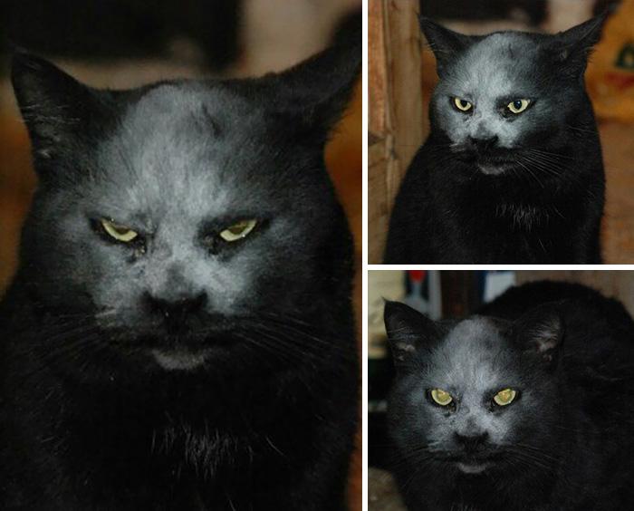 Este gato quedó cubierto de harina y ahora parece un demonio