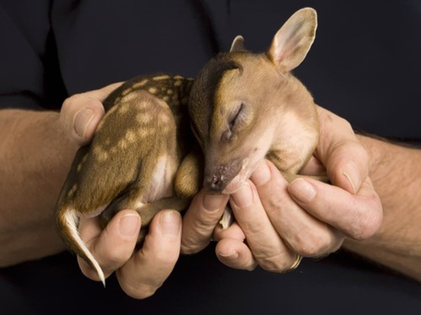 20 De las más adorables crías animales de todos los tiempos