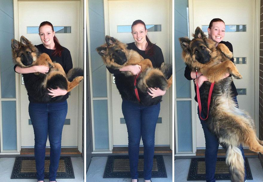 crecimiento-perro-nasra-8-meses-alex-dennison-ashley-lewis (6)