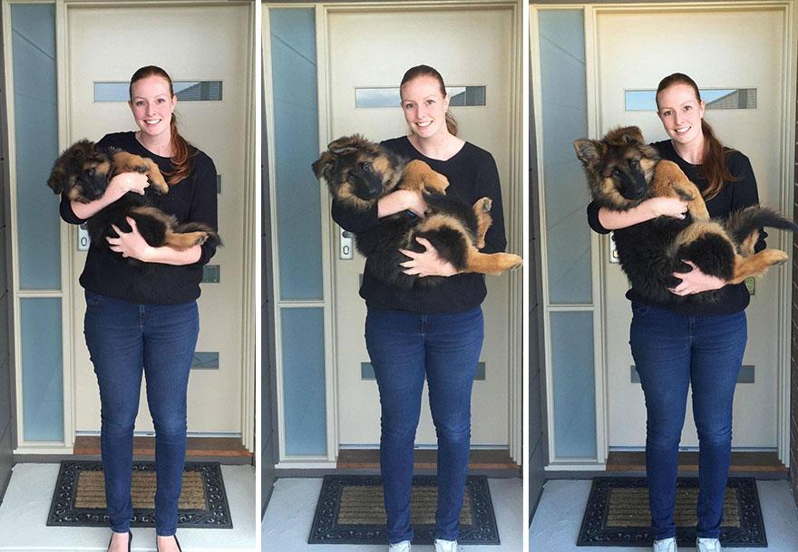 crecimiento-perro-nasra-8-meses-alex-dennison-ashley-lewis (7)