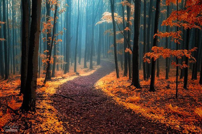 Bosques otoñales de ensueño, por el fotógrafo checo Janek Sedlar