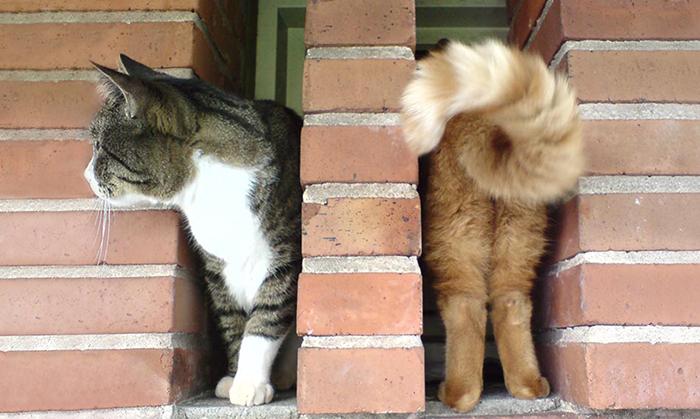 20 Fotos de gatos tomadas en el momento justo