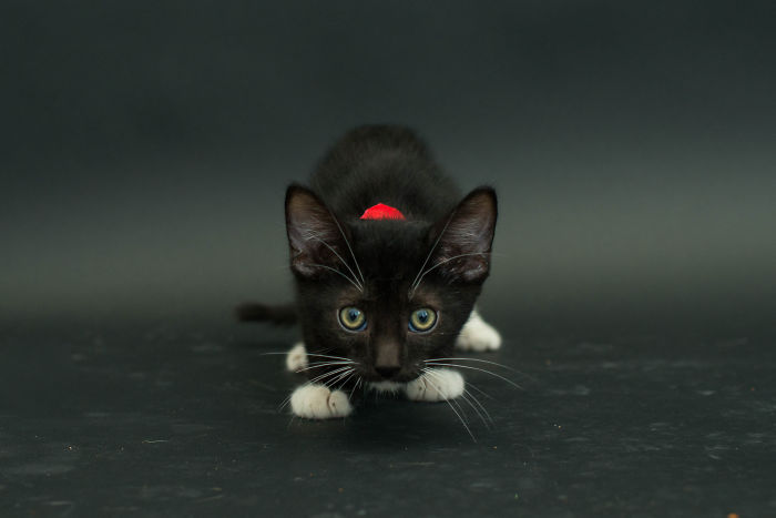Hago fotos de los gatos negros de los refugios para animar a adoptarlos