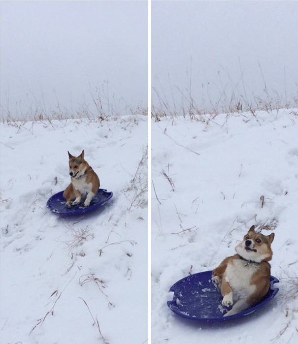 perros-cometiendo-errores (3)