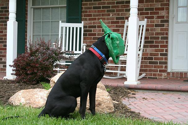 perros-cometiendo-errores (4)