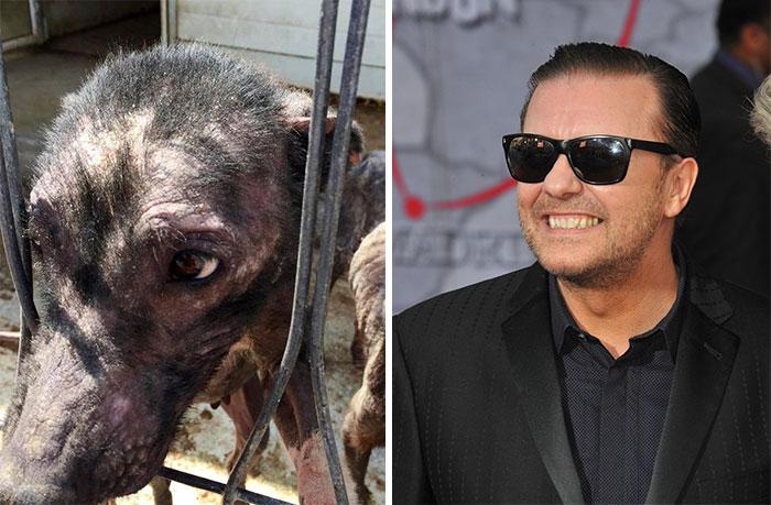 Un tuit de Ricky Gervais salva a 650 perros hambrientos y abandonados