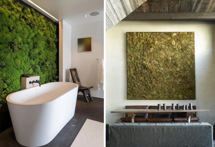 Paredes de musgo: La tendencia de interior que convierte tu hogar en un bosque