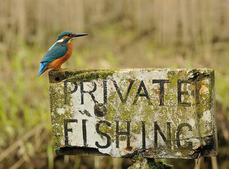 foto-perfecta-martin-pescador-alan-mcfayden (4)