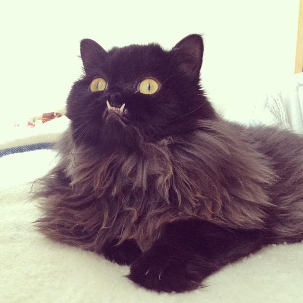 gato-rescatado-princess-monster-truck (15)