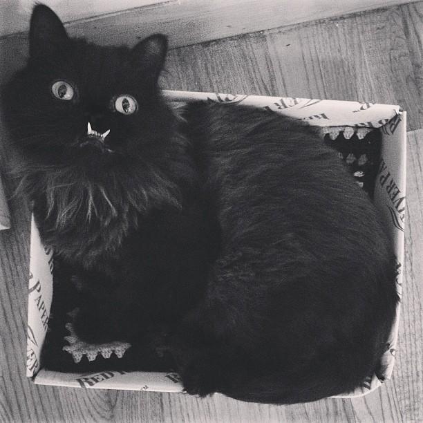 gato-rescatado-princess-monster-truck (6)